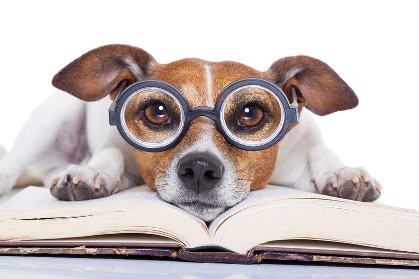 Pes in knjiga